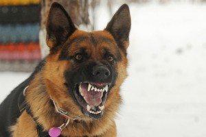Lawyer for dog bite case in Ellijay